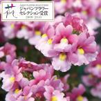 草花の苗/18年2月中旬予約 ネメシア:メロウミルキーピンク3.5号ポット