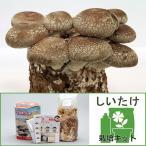菌床キノコ栽培セット でるまっしゅ しいたけ 1セット