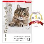 Yahoo!entre square Yahoo!店今日、やすんじゃえば…? サプライズBOOK ネコ 猫 写真 本 書籍 写真集 コンビニ本 インスタ 人気猫 癒し かわいい