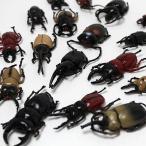 すくい用おもちゃ フィギア昆虫(カブトムシ&クワガタ) 100ヶセット