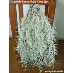 エアープランツ ウスネオイデス 5セット エアプランツ スパニッシュモス チランジア