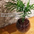 送料無料 テーブルヤシ 観葉植物 ハイドロカルチャー 日陰 インテリア ポトス 風水 北欧 お祝い モダンラウンドグラス