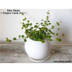 送料無料 ワイヤープランツ 観葉植物 インテリア 北欧 鉢植え お祝い 陶器 ホワイトサークル