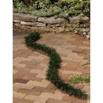 タマリュウ(玉竜スリット)4本セット 駐車場 花壇縁取り 植木 庭木 苗木 常緑宿根草