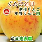 フルーツ りんご 信州りんご 長野県佐久市 小林りんご園 樹上完熟信州りんご ぐんま名月 5kg(12玉〜20玉) エコファーマー農園 送料無料
