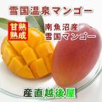 フルーツ 果物 マンゴー  新潟県 南魚沼産 雪国温泉マンゴー 温泉の熱で育てた甘熟マンゴー  4Lサイズ 550g以上 1個 送料無料