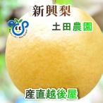 フルーツ 梨 和梨 新興 新潟県 エコファーマー認定農園 土田農園 有機栽培 新興梨 家庭用 10kg(14個〜18個)