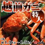 越前ガニ(特大)献上級・福井県産越前がに・蟹 約1.3〜1.5kg×1 御歳暮 ギフト  [冷蔵]