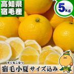 宿毛小夏 5kg 送料無料 訳あり 高知県産の爽やかみかんを箱買い 別名:日向夏、ニューサマーオレンジ