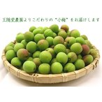 王隠堂農園の小梅2kg【送料無料】(紀州和歌山・三重県・奈良県)