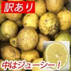 【無農薬】宮古島・石垣島のマイヤーレモン1kg(沖縄県)