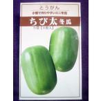 ★種子★処分★ ちび太 ミニ冬瓜 とうがん 宝種苗 18.10 (ゆうパケット便可能)