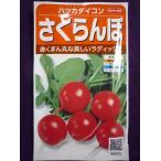 ★種子★ さくらんぼ ハツカダイコン V サカタのタネ 18.10 (ゆうパケット便可能)