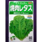 ★種子★ 焼肉レタス(緑) チマ・サンチュ V サカタのタネ 21.05 (ゆうパケット便可能)