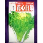 ★種子★ 花心白菜 半結球白菜 アサヒ農園 20.05 (ゆうパケット便可能)
