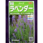 ★種子★ ラベンダー H サカタのタネ 17.10 (ゆうパケット便可能)