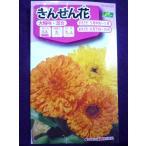★種子★処分★ 金せん花(カレンジュラ) 切り花用 混合 サカタのタネ 17.05 (ゆうパケット便可能)