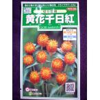 ★種子★ 黄花千日紅 切り花用 サカタのタネ 18.10 (ゆうパケット便可能)