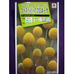 ★種子★ クラスペディア グロボーサ ゴールドスティック タキイ種苗 18.04 (ゆうパケット便可能)