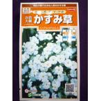 ★種子★ 白花大輪かすみ草 コベントガーデンマーケット サカタのタネ 17.10 (ゆうパケット便可能)