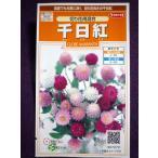 ★種子★ 千日紅 切り花用混合 サカタのタネ 17.10 (ゆうパケット便可能)