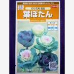 ★種子★ 葉ぼたん 切り花用 混合 サカタのタネ 17.05 (ゆうパケット便可能)
