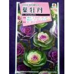★ 種子 ★ 処分 ★  花輪菊 メリー混合 サカタのタネ 16.05 (ゆうパケット便可能)