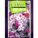 ★種子★処分★ ビスカリア 混合 タキイ種苗 17.04 (ゆうパケット便可能)