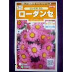 ★ 種子 ★  ローダンセ 切り花用 混合 サカタのタネ 17.05 (ゆうパケット便可能)