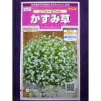 ★種子★ かすみ草 ジプシー ホワイト サカタのタネ 17.05 (ゆうパケット便可能)