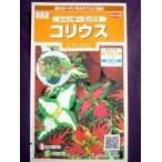 ★種子★処分★ コリウス レインボー ミックス サカタのタネ 16.10 (ゆうパケット便可能)