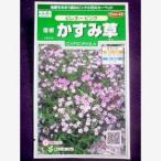 ★種子★ 宿根かすみ草 ピレネーピンク サカタのタネ 17.10 (ゆうパケット便可能)
