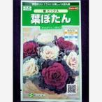 ★種子★ 葉ぼたん 華 ミックス サカタのタネ 17.05 (ゆうパケット便可能)