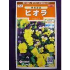 ★種子★処分★ ビオラ 美色混合 サカタのタネ 16.05 (ゆうパケット便可能)