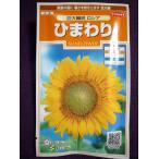 ★種子★ ひまわり 巨大輪咲 ロシア サカタのタネ 17.10 (ゆうパケット便可能)