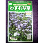 ★種子★ わすれな草 ドワーフ ブルー サカタのタネ 18.05 (ゆうパケット便可能)