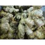★種芋★生姜★ お多福大しょうが 1kg