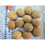 ★種芋★秋馬鈴薯★ デジマ Sサイズ 1kg (キャッシュ限定でレターパック便も対応)