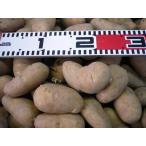 ★ 種芋 ★ 春馬鈴薯 ★  メークイン 1kg(レターパック便可能)
