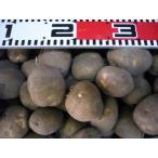 ★種芋★春馬鈴薯(ジャガイモ)★ キタアカリ 1kg Lサイズ 販売期間:3月末まで (キャッシュ限定でレターパック便も対応)