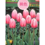 ★球根★チューリップ★ 桃・ピンクインプレッション 国産12cm 1球 (レターパック便可能)