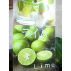 ★果樹苗★柑橘★ ライム 素掘り・接木1年生・4号長鉢 1鉢