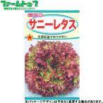 野菜の種/種子 にんじん ニンジン 黒田五寸 陽彩 種 (レターパックライト発送 全国一律370円)