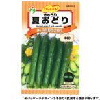 ウタネ 野菜の種/種子 とうもろこし みわくのコーン ゴールドラッシュ 種 (レターパックライト発送 全国一律370円)