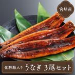ギフト (うなぎ 国産) 蒲焼き (鹿児島産鰻ウナギ約170g×3)送料無料