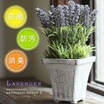 ラベンダー アーティフィシャルグリーンL(消臭グッズ 空気清浄 造花 鉢植え デオドラント 薄紫 フラワー アンティーク)