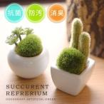 サキュレントリフレリウム 消臭アーティフィシャルグリーン(消臭グッズ 空気清浄 造花 観葉植物 デオドラント 多肉植物)