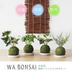 Wa Bonsai・和盆栽 消臭アーティフィシャルグリーン 苔玉タイプ(キシマ 消臭グッズ 空気清浄 造花 デオドラント 観葉植物)
