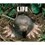 LIFE / フジファブリック (CD)