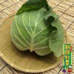 キャベツ 1玉 産地直送 鹿児島県産 宮崎県産 野菜セットと同梱で送料無料